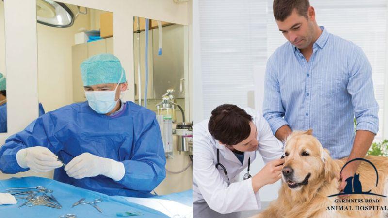 #KingstonAnimalHospital #24HoursAnimalHospital #AnimalHospital #GardinersRoadAnimalHospital #VeterinaryHospital #Micro-chipService