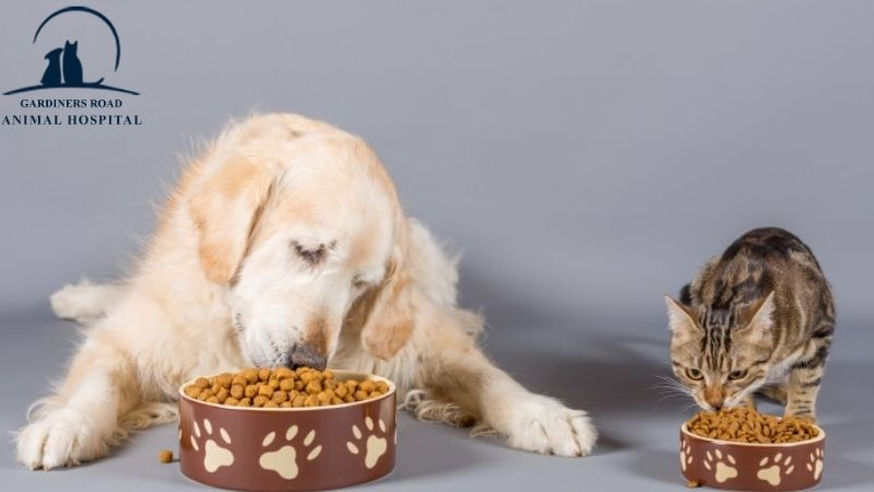 #KingstonAnimalHospital #AnimalHospital #GardinersRoadAnimalHospital #NutritionServiceinkingston #NutritionService #CatNutrition #DogNutrition