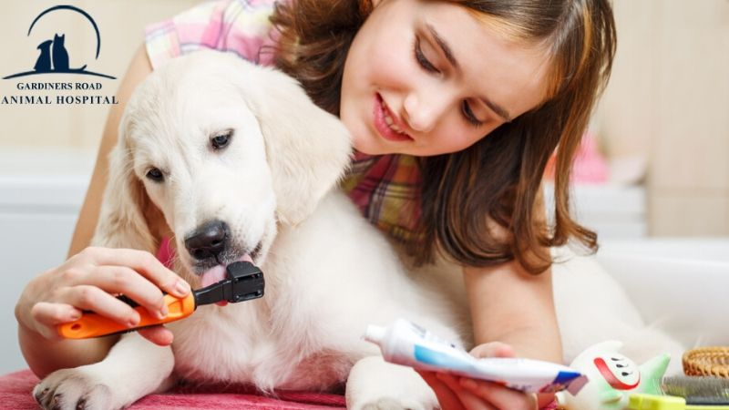 Dental care Service – At GRAH we providing best Pet Dental Care Services