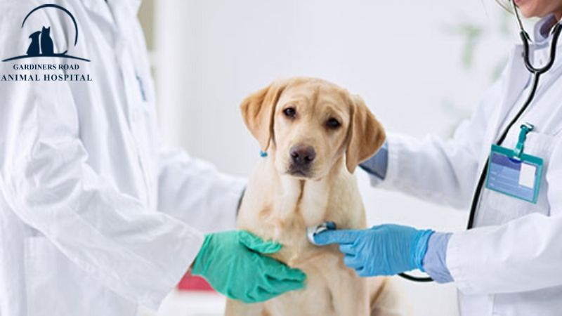 #KingstonAnimalHospital #GardinersRoadAnimalHospital #AnimalHospital #VeterinaryHospital #FleaAndTickMedication #AnimalWormPrevention #AnimalSkinProblems #AnimalAllergies #ParasiteControlServices