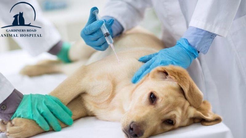 #KingstonAnimalHospital #GardinersRoadAnimalHospital #AnimalVaccines #CheapDogVaccines #DogVaccines  #CatVaccines