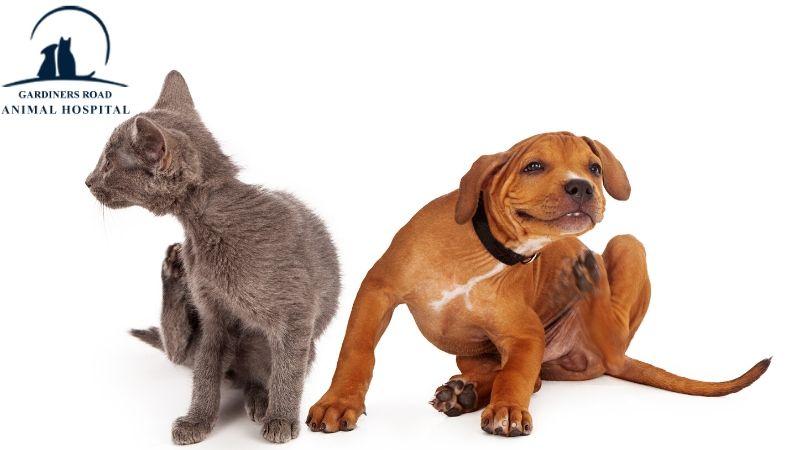 #KingstonAnimalHospital #GardinersRoadAnimalHospital #AnimalHospital #VeterinaryHospital #FleaAndTickMedication #AnimalWormPrevention #AnimalSkinProblems #AnimalAllergies #ParasiteControlServices