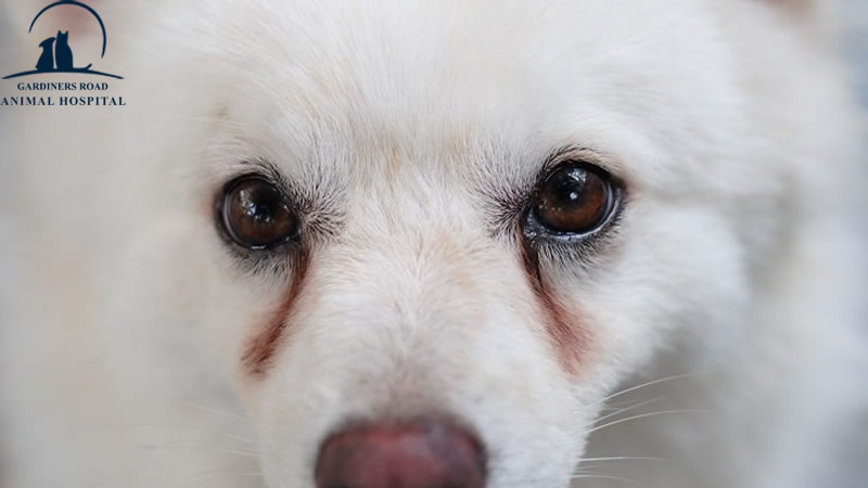 Parasite Control Service: All you need to know about Dog Eye Infection