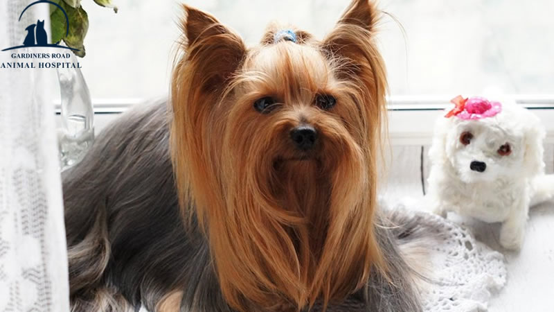 Dog Grooming: How to Groom a Dog