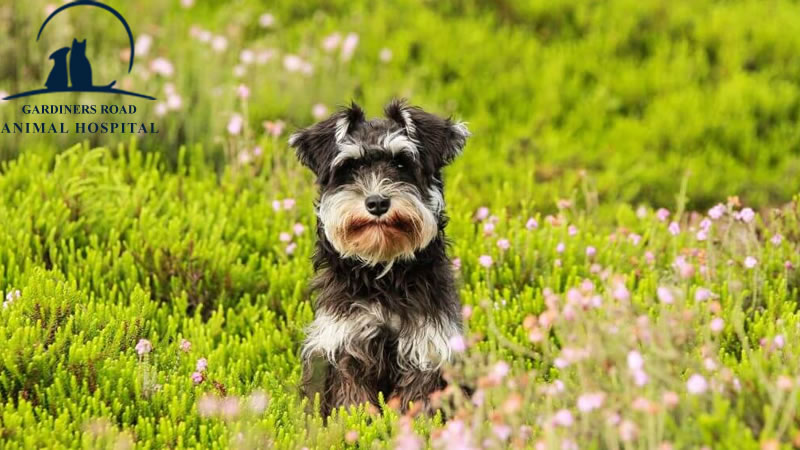 Animal Allergies: All About Seasonal Allergies in Dogs