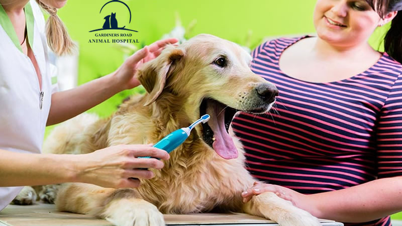 Dentistry Service: The Risks of Dental Care Service in Pets