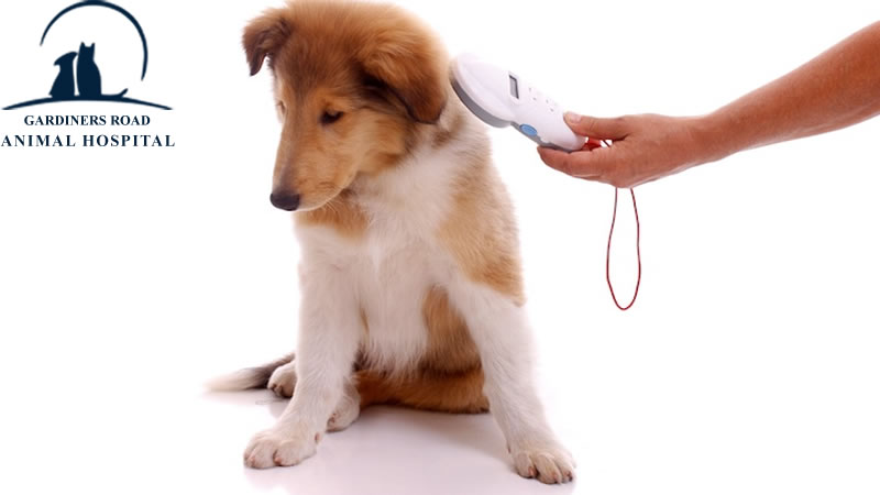 Microchip Service: Why is it important to ensure my pet is microchipped?