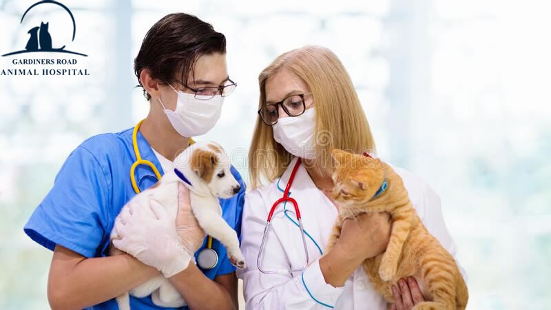 Vaccination Service: How Often to Vaccinate a Dog or Cat