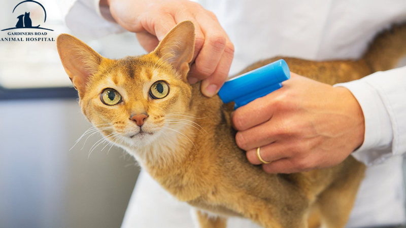 Micro-Chip Service: Pets Seized if you don't get them Microchipped