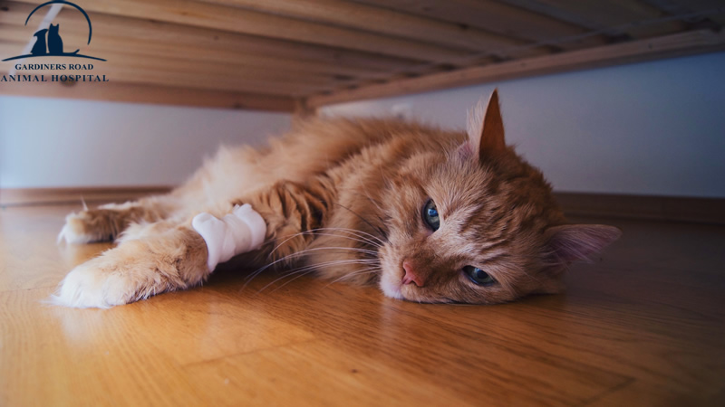 Veterinary Service Kingston: How Will You Know When Your Cat Is in Pain?