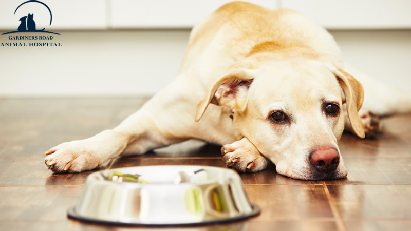 Animal Allergies: Signs Your Pet May Have Allergies