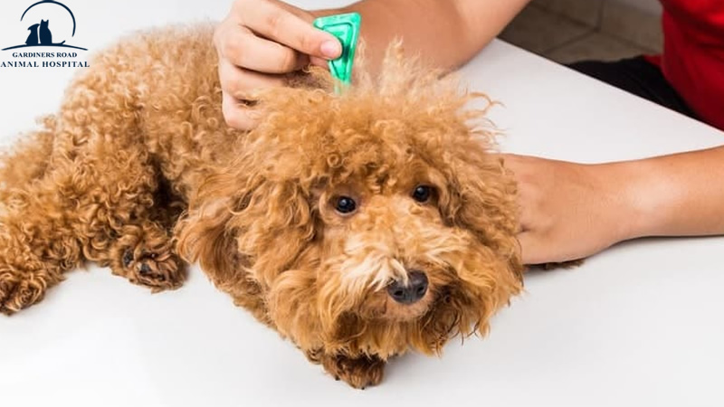 Parasite Control Service: How Do Flea and Tick Medication Work