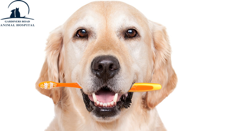 Pet Dental Care: Keeping Your Dog's Teeth Clean & Healthy