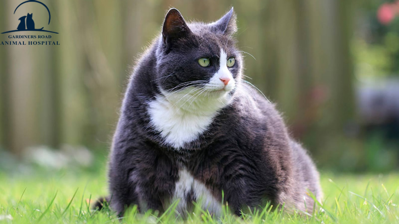 Veterinary Service: Overweightness in Cats and Dogs
