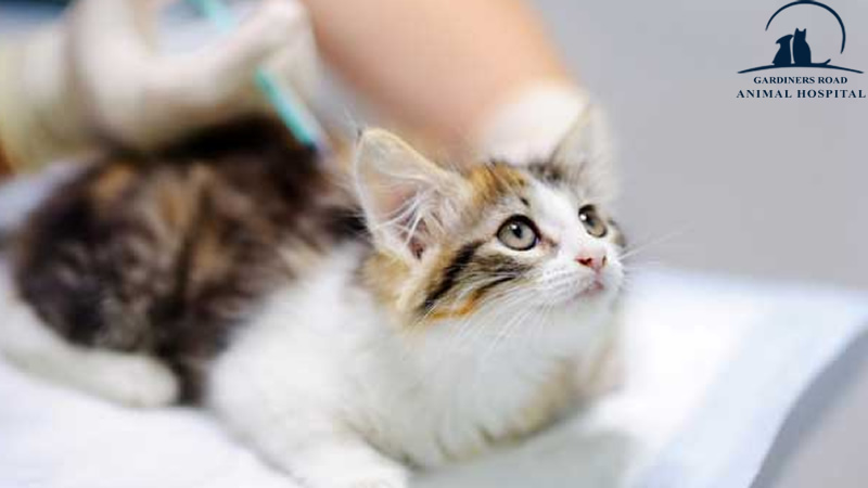 Cat Vaccines Kingston: The Importance of Updating Your Cat's Vaccinations