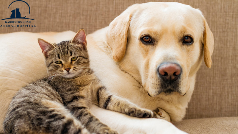 Veterinary Services in Kingston: Caring for Senior Cats and Dogs
