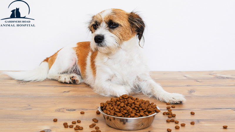 Nutrition Service in Kingston: Ingredients to Avoid in Your Pet Food