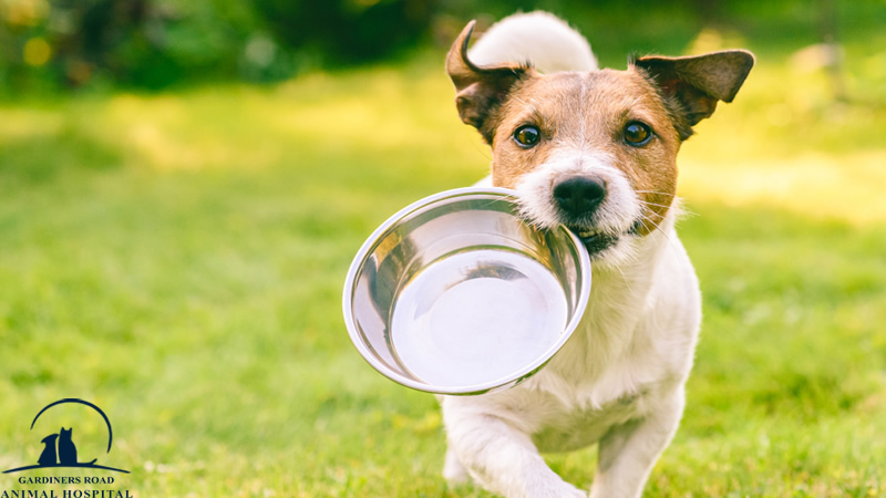 Preventive Care Service: Why Your Pets Need Plenty of Water