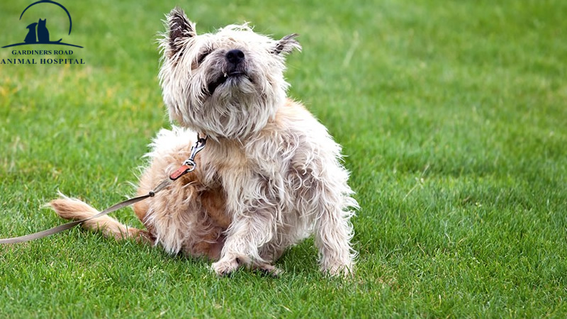 Animal Skin Problems: How to Stop Your Dog from Scratching