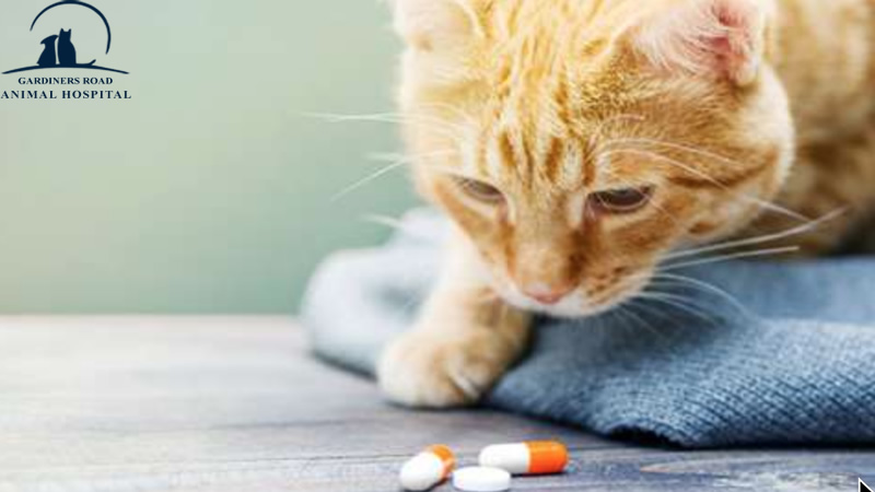 Pharmacy Service in Kingston: Tips for Giving Your Pet Medicines