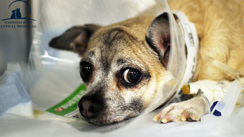 Veterinary Services in Kingston: What Should You Do If Your Pet Is Injured?