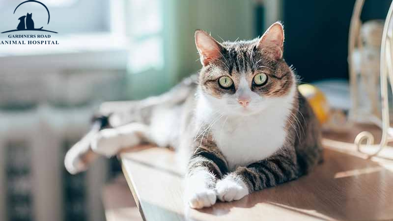 Vaccination Services in Kingston: Feline Vaccines Benefits and Risks