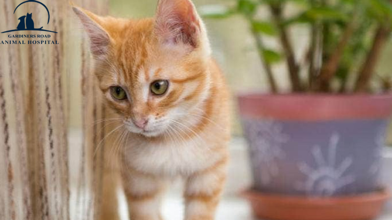 Veterinary Service in Kingston: Getting Your Home Ready for a New Kitten