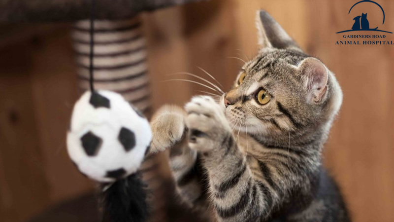 Nutrition Services in Kingston: Tips for Managing Your Cat's Weight