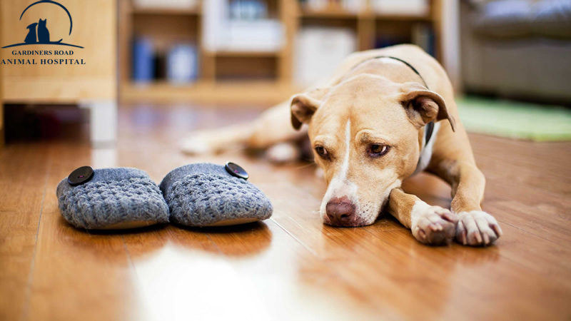 Veterinary Service in Kingston: Signs You May Need to Take Your Dog to the Vet