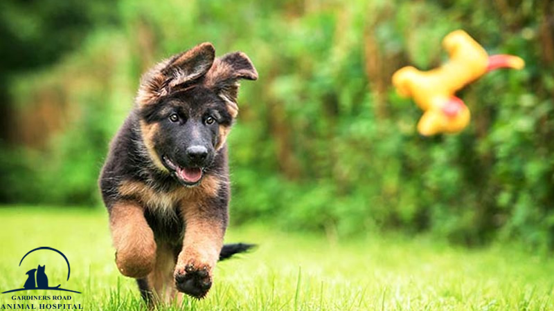 Veterinary Services in Kingston: Signs that Your Dog Is Not Getting Enough Exercise