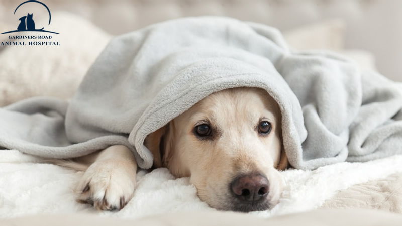 Veterinary Services in Kingston: How to Pacify Your Dog's Upset Stomach