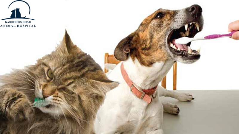 Dental Care Service in Kingston: Why Dental Care Service Is Essential for Your Pet's Wellness