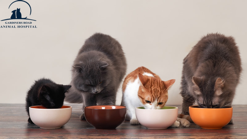 Nutrition Service in Kingston: Fruits and Vegetables for Cats