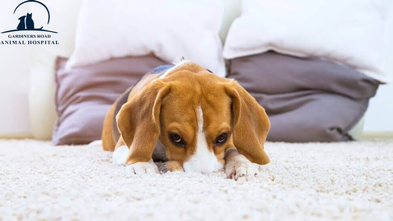 Emergency Care Service: Common Causes of Vomiting in Dogs