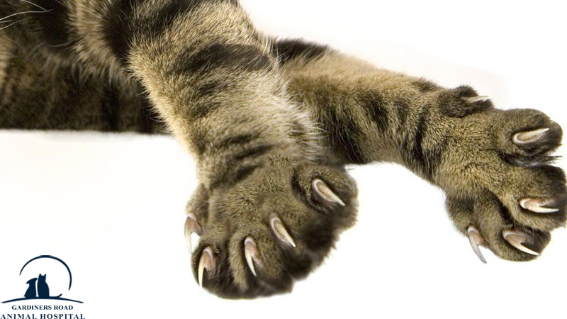 Veterinary Service in Kingston: What's the Problem with Declawing Cats?