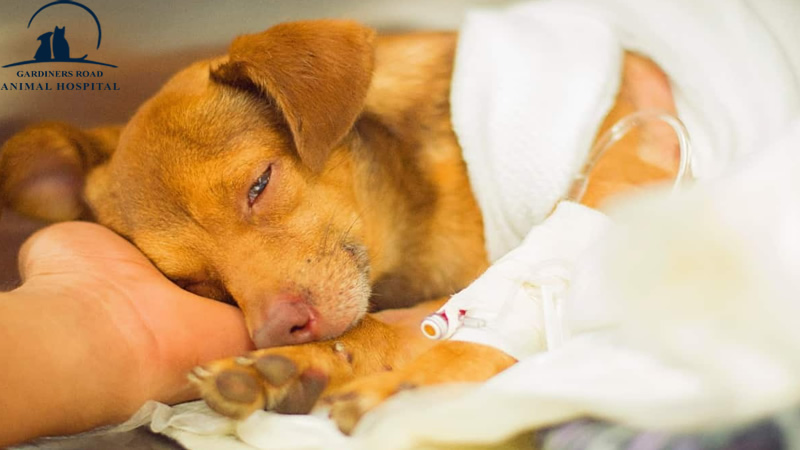 Emergency Care Service: How to Recognize a Pet Emergency