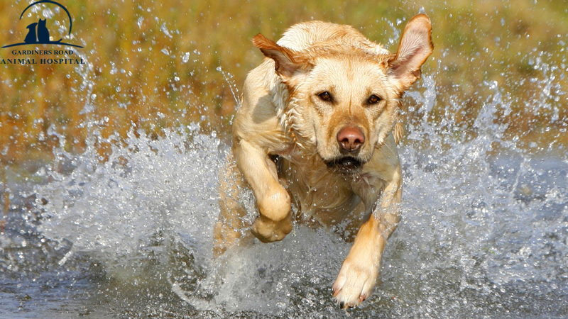 Veterinary Service in Kingston: Avoid Leptospirosis and Keep Your Dog Healthy