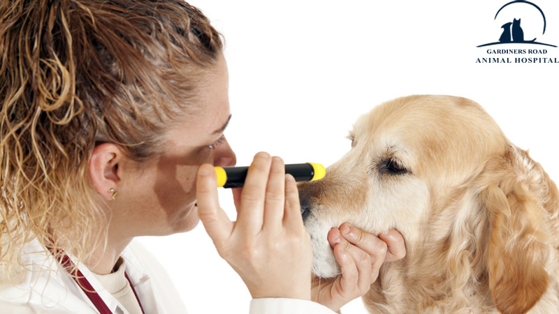 Dog Eye Infection: How to Treat Eye Infections in Dogs