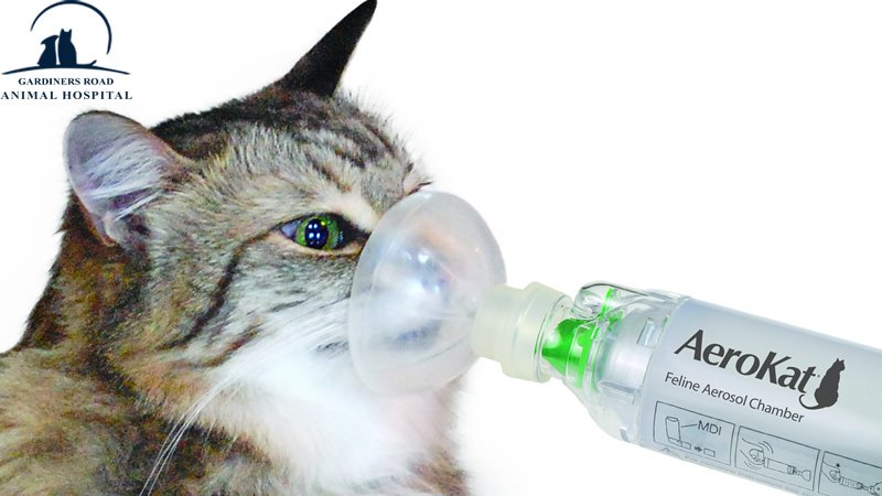 Animal Allergies: Can Cats Get Asthma