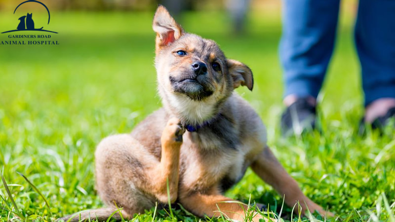 Parasite Control Service: Signs of Fleas in Your Pet