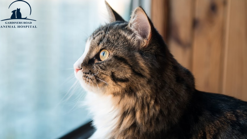 Veterinary Service in Kingston: Is It Safe to Let Your Cat Outside?