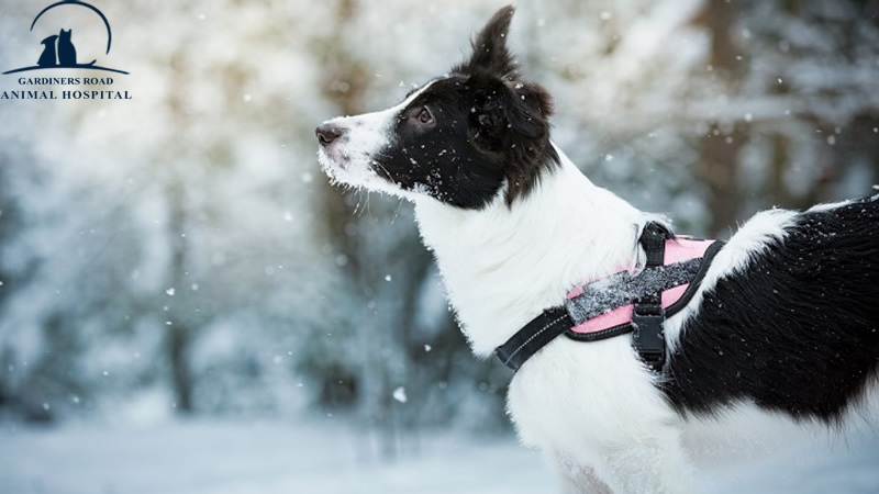 Parasite Control Service: Why Your Dog Still Needs Flea and Tick Protection During the Winter