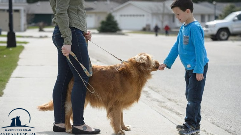 Veterinary Service in Kingston: Are You Petting Your Dog the Right Way?