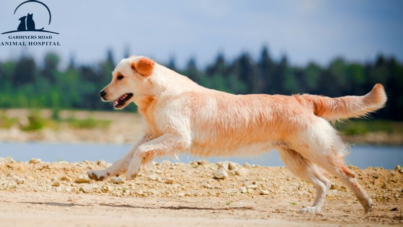 Kingston Vet: How to Care for Your Aging Dog's Joints