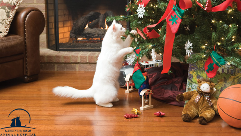 Veterinary Service in Kingston: Holiday Safety Basics for Every Pet Owner