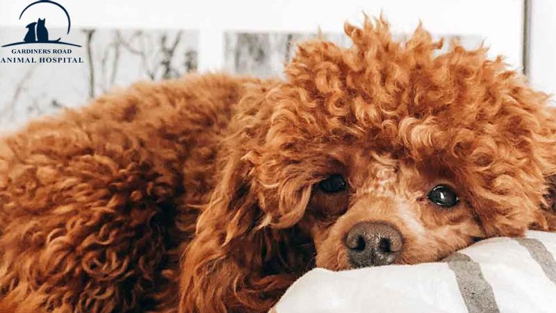 Kingston Vet: Tips for Calming Your Nervous Dog
