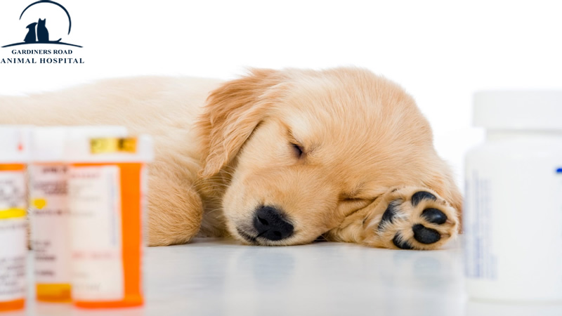 Pharmacy Service Kingston: Does Missing a Dosage of Your Pet's Medicine Put Them at Risk?