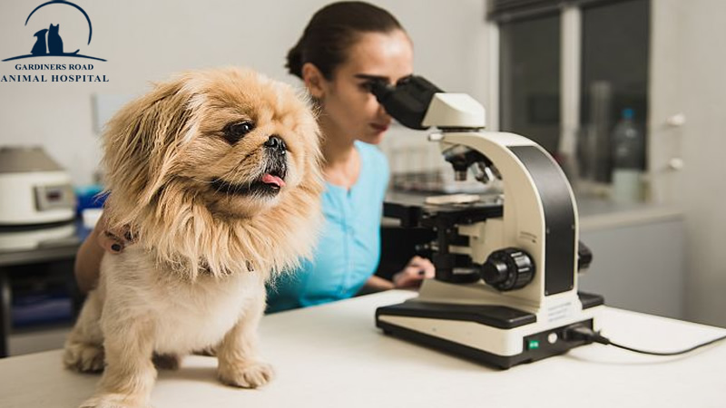 Laboratory Service in Kingston: The Importance of Care Testing for Your Pet's Health
