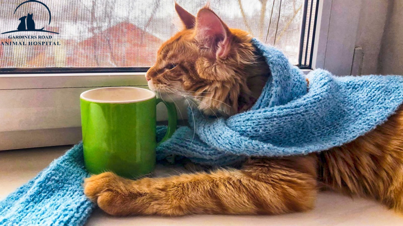 Veterinary Service in Kingston: Caring for Your Outdoor Cat in the Winter