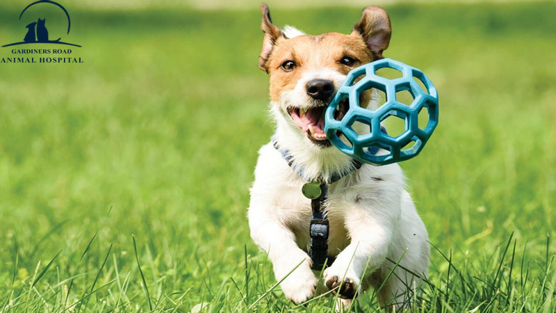 Veterinary Service in Kingston: Try Out These Fun Exercise Ideas with Your Dog